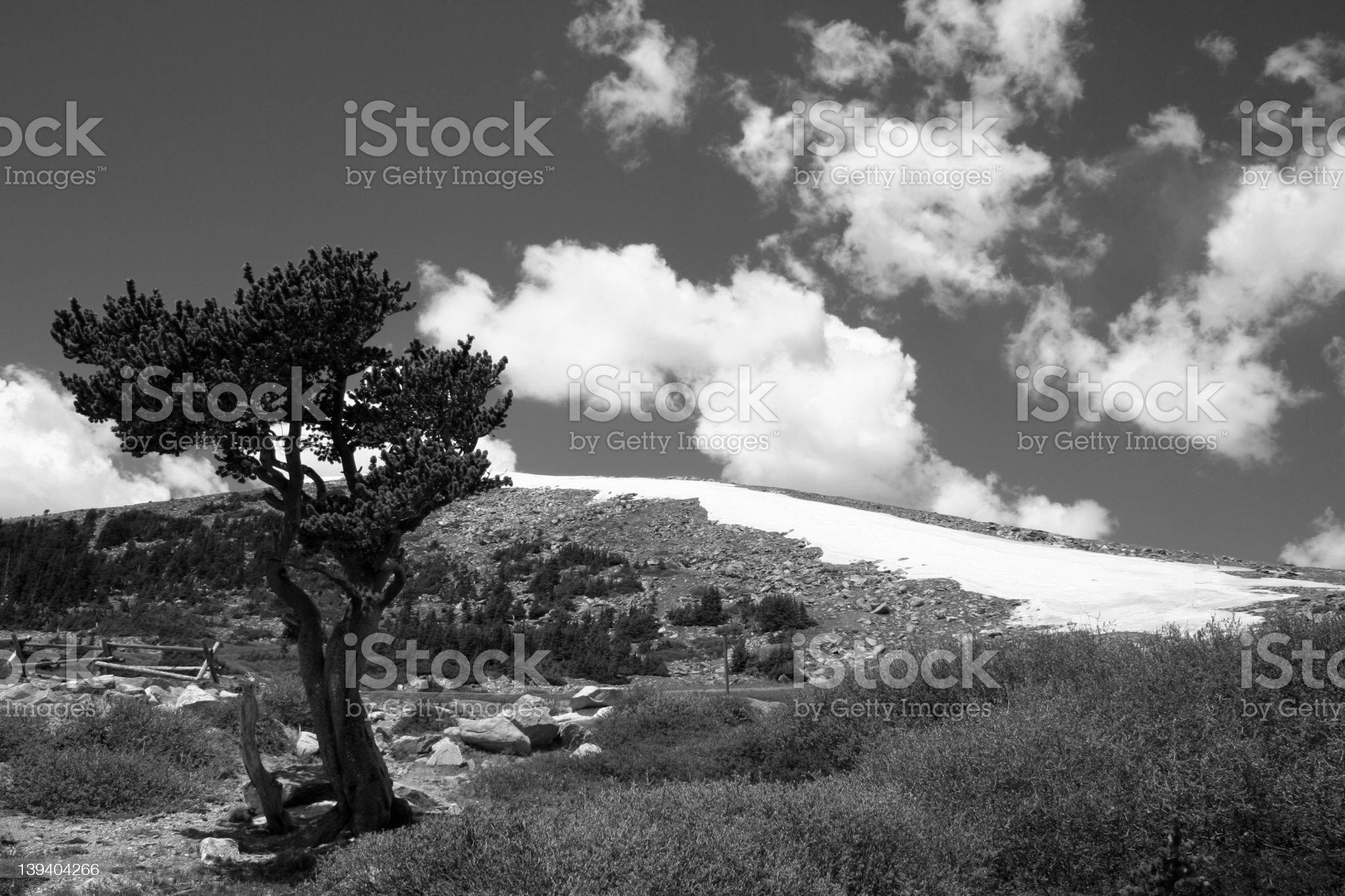 mt evans treeline royalty-free stock photo