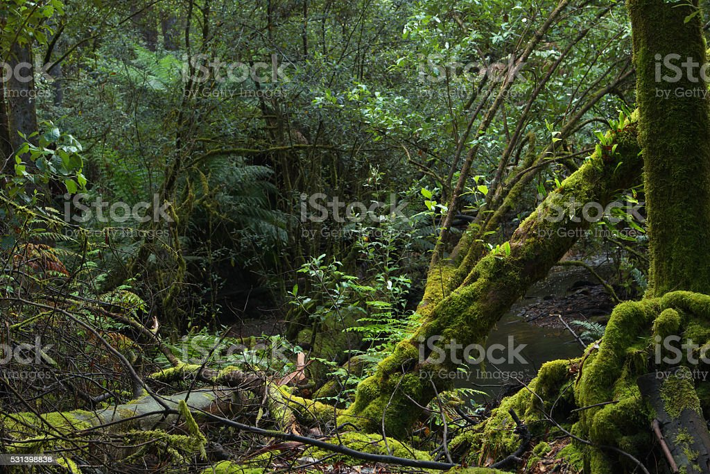Mt field national park tasmania home of famous russell falls stock photo