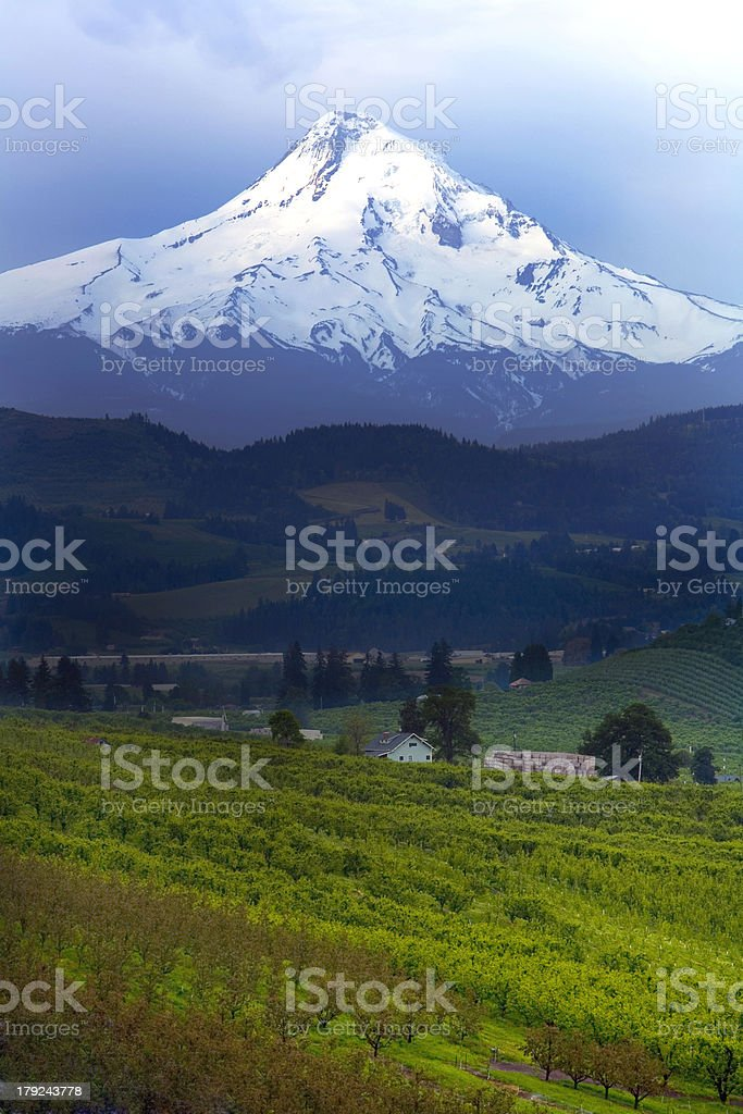 Mt Hood and Countryside stock photo