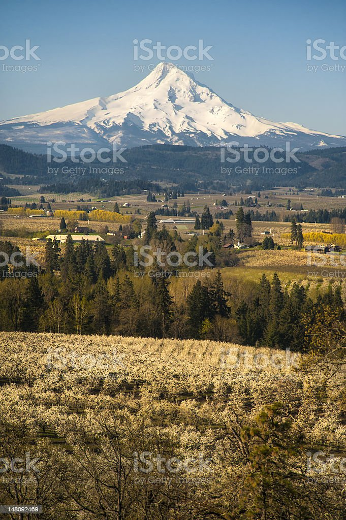 Mt Hood, apple orchards, Oregon royalty-free stock photo