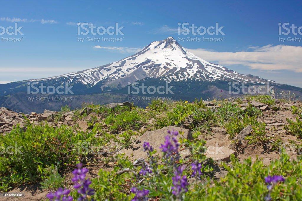 Mt. Hood stock photo