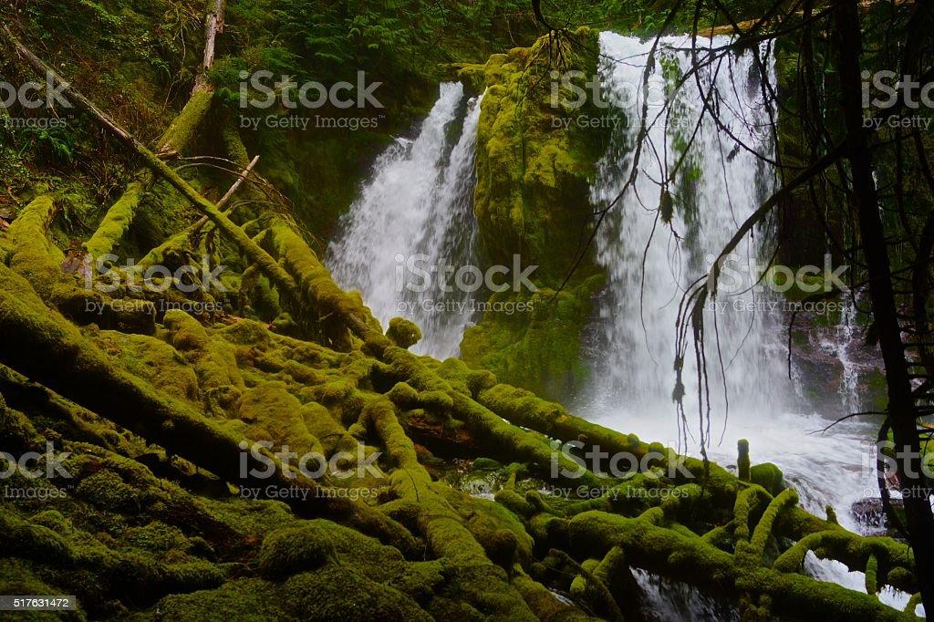 Mt. Jefferson Green Stream stock photo
