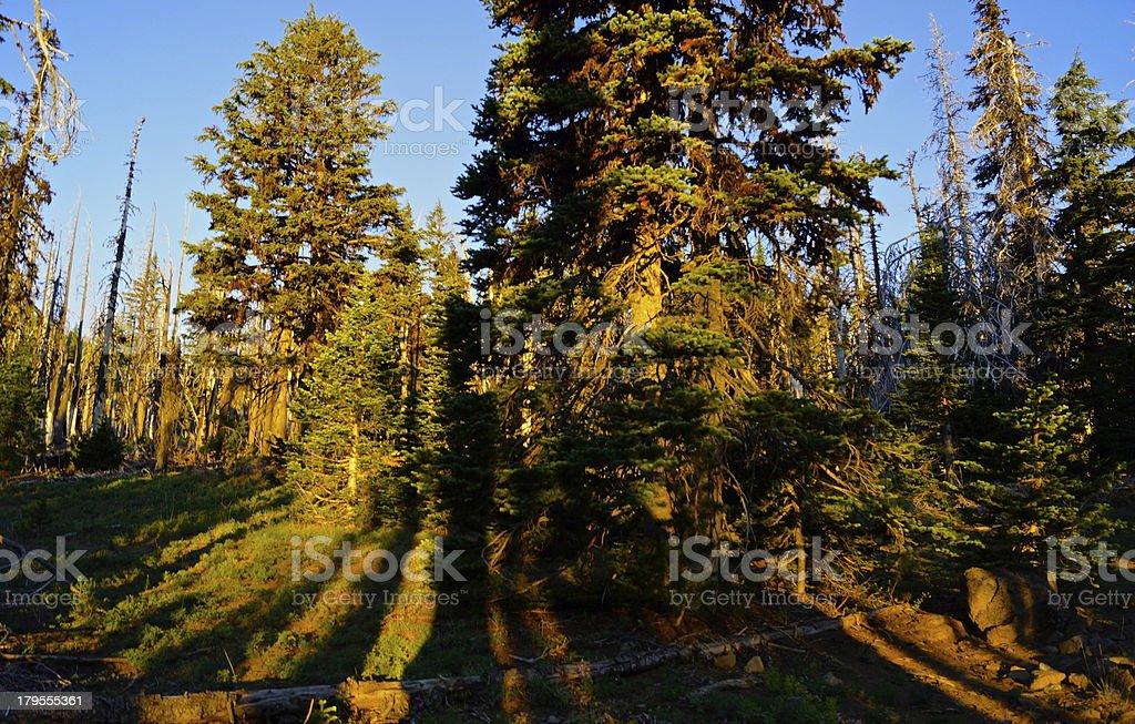 Mt. Jefferson Wilderness Sunrise stock photo