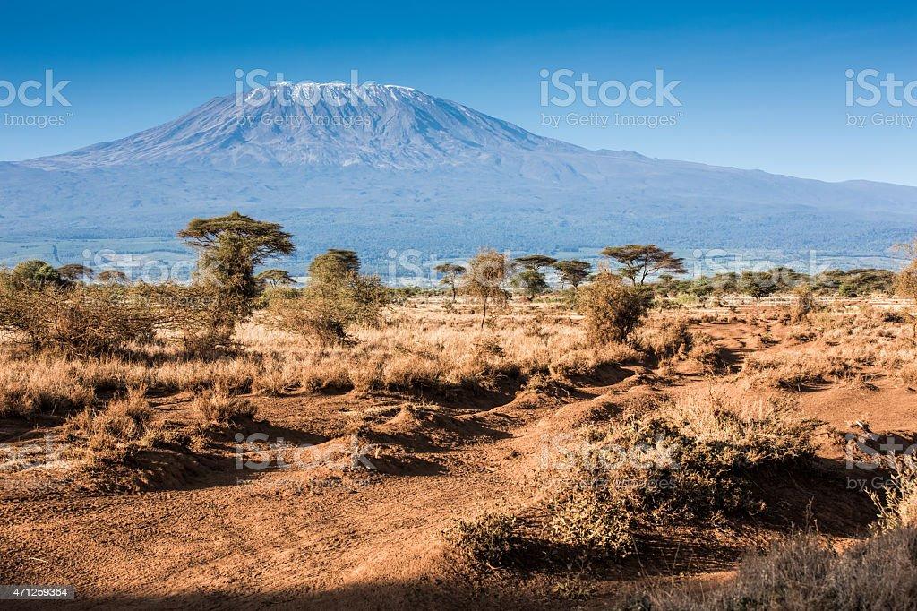 Mt Kilimanjaro and Acacia trees - in the morning stock photo