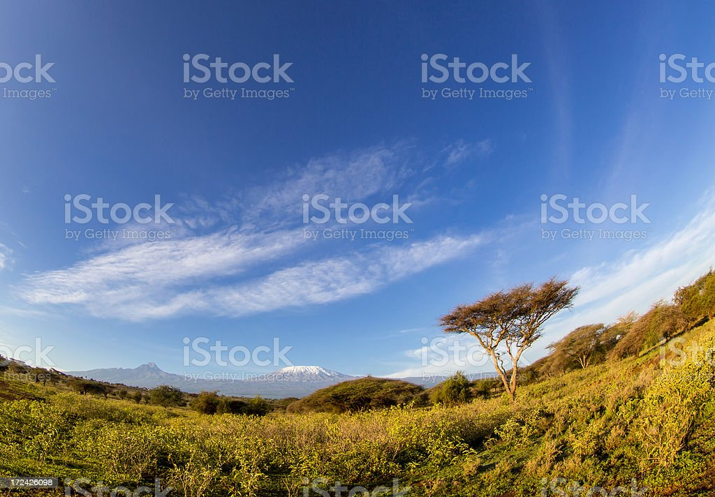 Mt Kilimanjaro and Moon - in the morning royalty-free stock photo