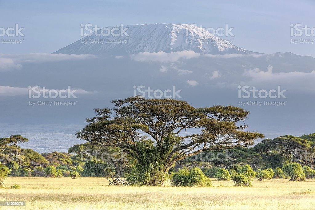 Mt Kilimanjaro, clouds and Acacia - in the morning stock photo