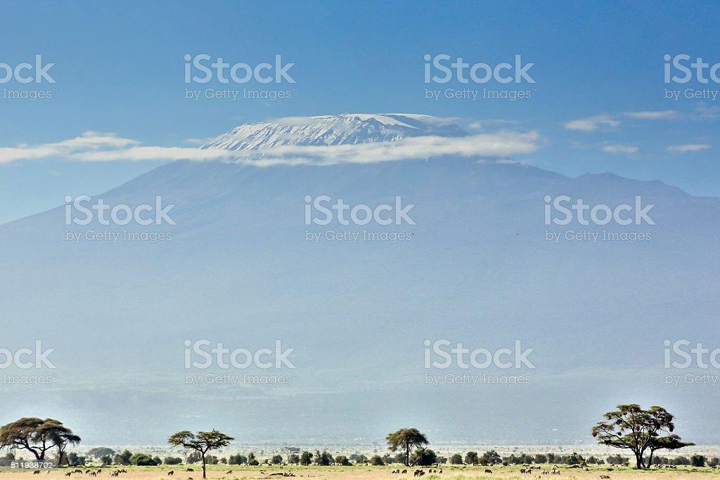 Mt Kilimanjaro, clouds, animals and Acacia trees stock photo