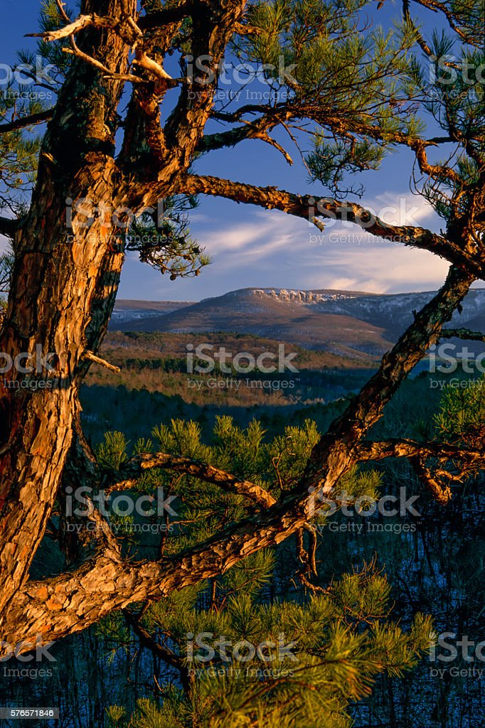 Mt. Magazine Through Pine Tree, Ross Hollow Overlook, AR stock photo