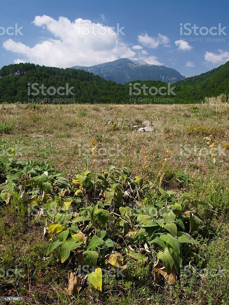 Mt. Mitikas - the highest peak in Greece stock photo