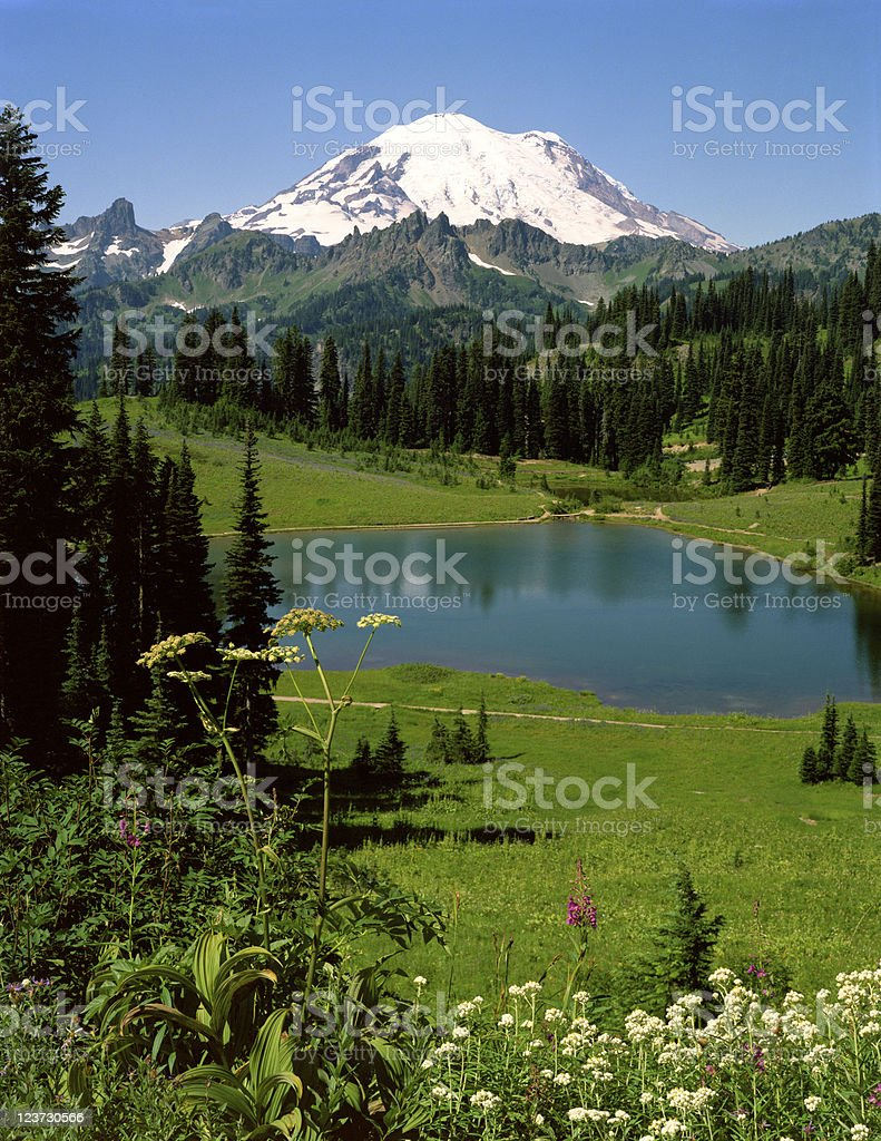 Mt Rainier and Tipsoo Lake royalty-free stock photo