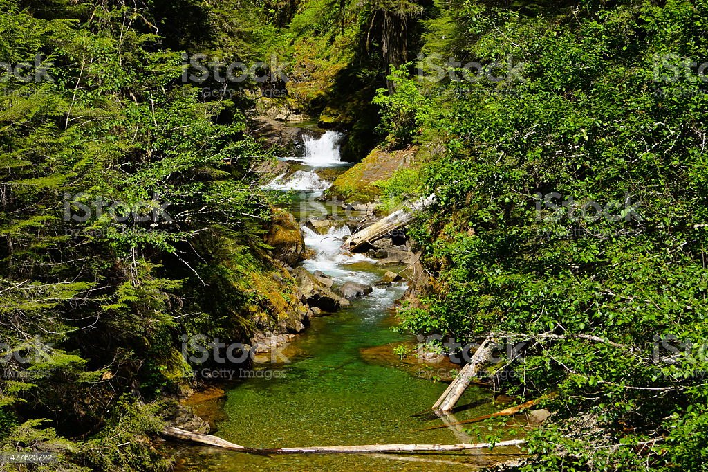 Mt. Rainier Green Creek stock photo