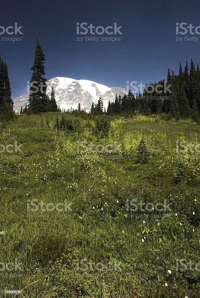 Mt Rainier in summer stock photo