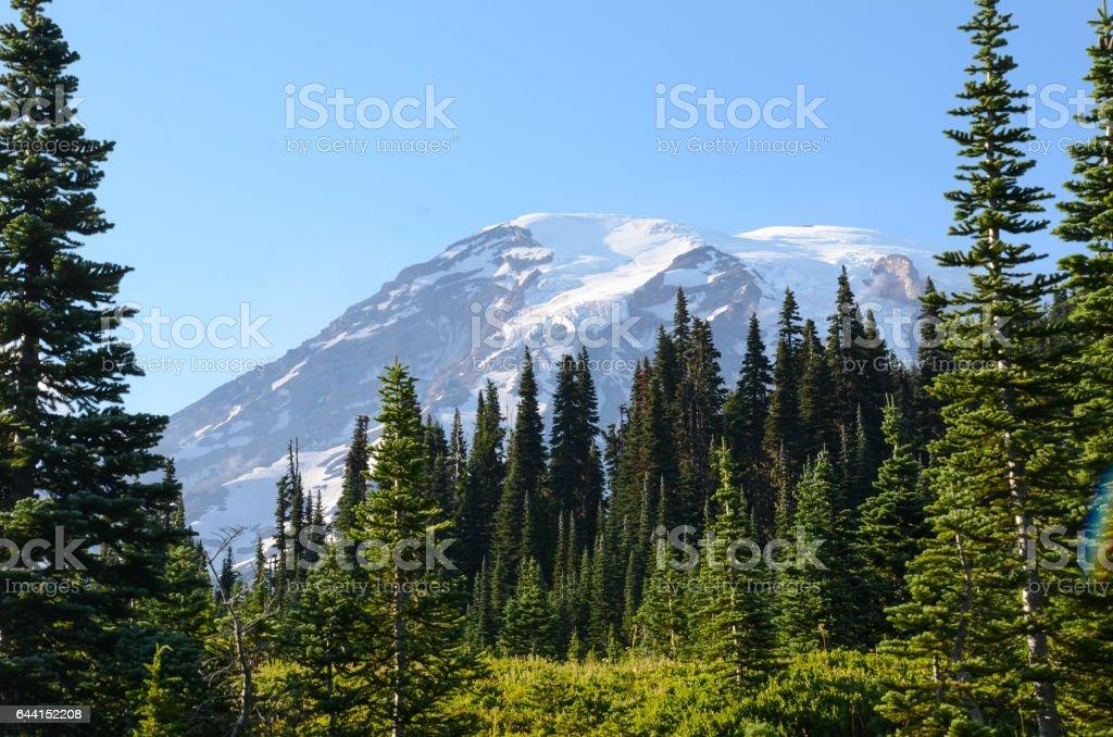 Mt Rainier peak behind evergreens stock photo