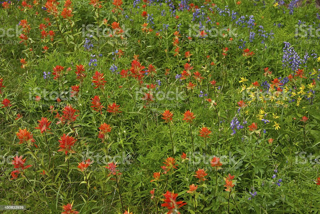 Mt. Rainier Wildflowers stock photo