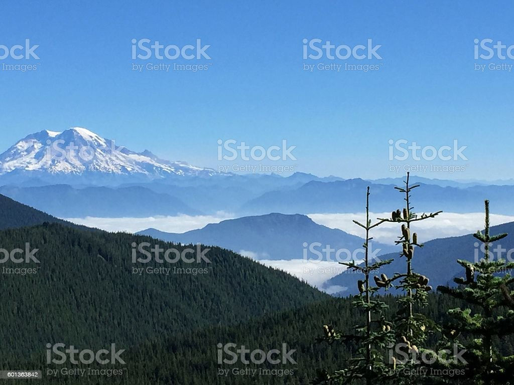 Mt. Rainier with Subalpine Fir Trees stock photo