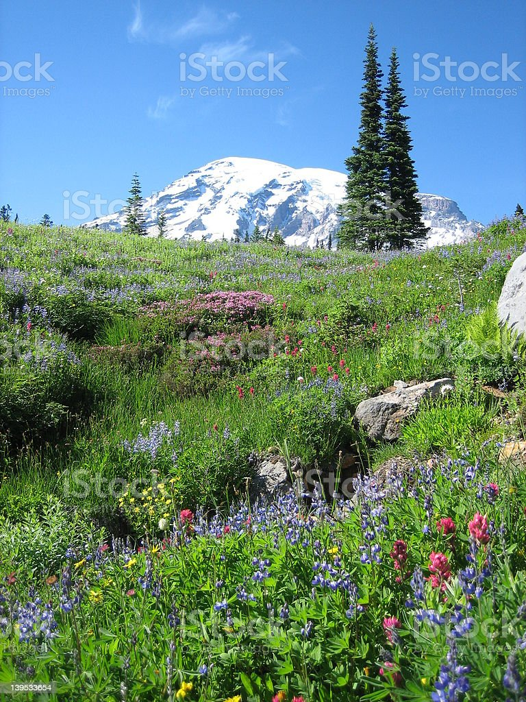 Mt. Ranier royalty-free stock photo