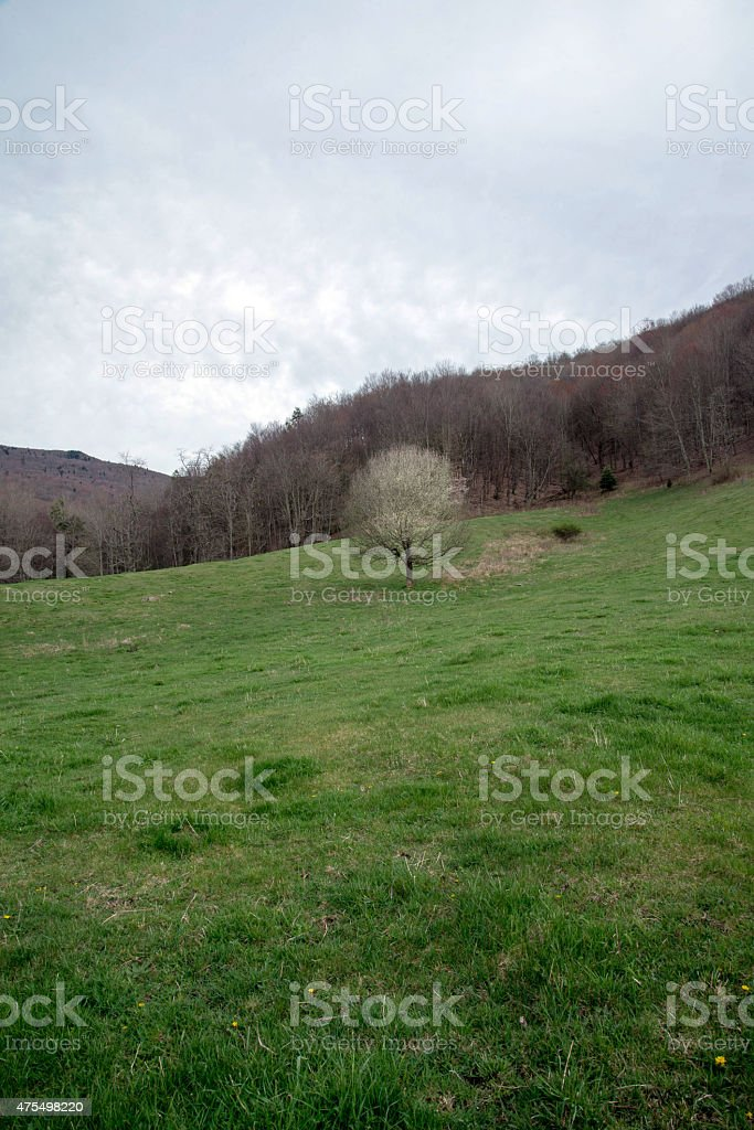 Mt. Rogers Recreation area in Virginia stock photo
