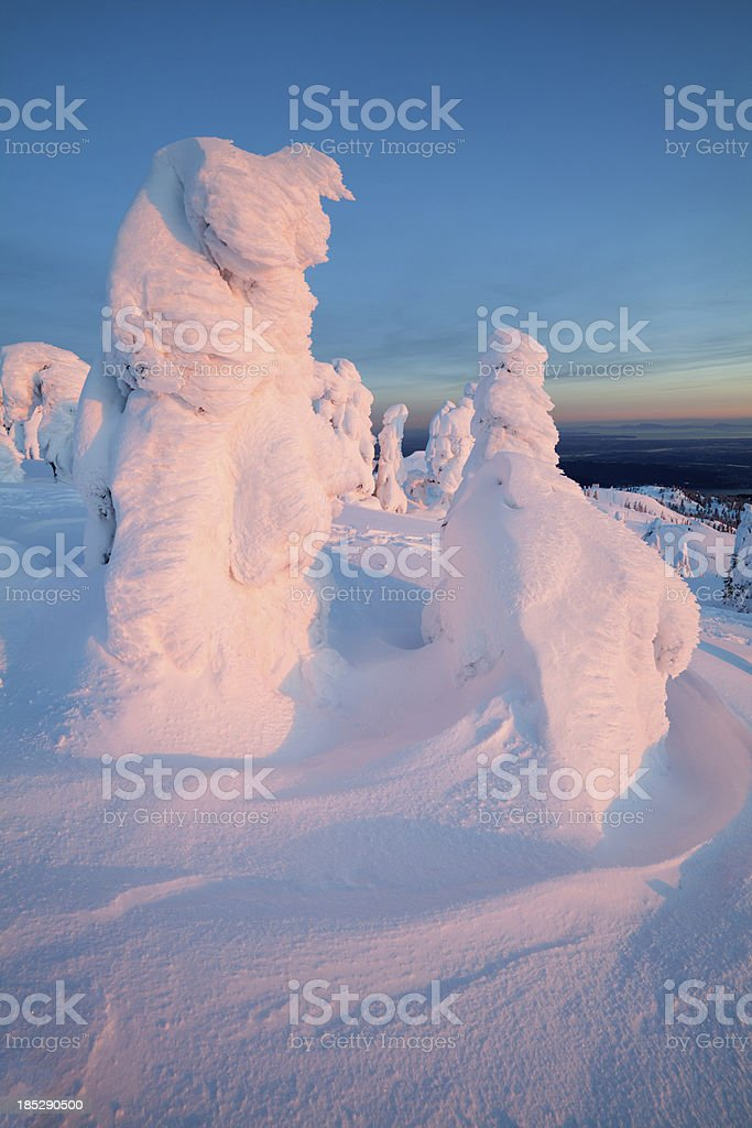Mt. Seymour Snow Covered Trees stock photo