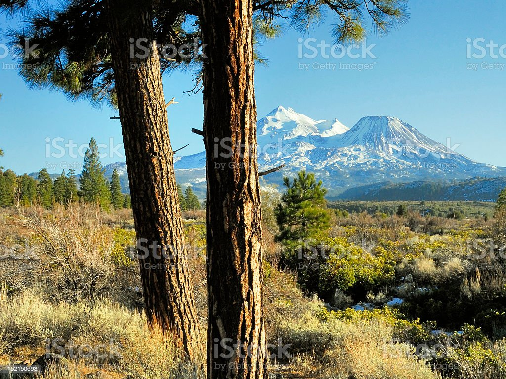 Mt Shasta and Douglas Firs stock photo