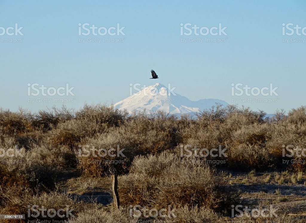 Mt. Shasta Flying Predator stock photo