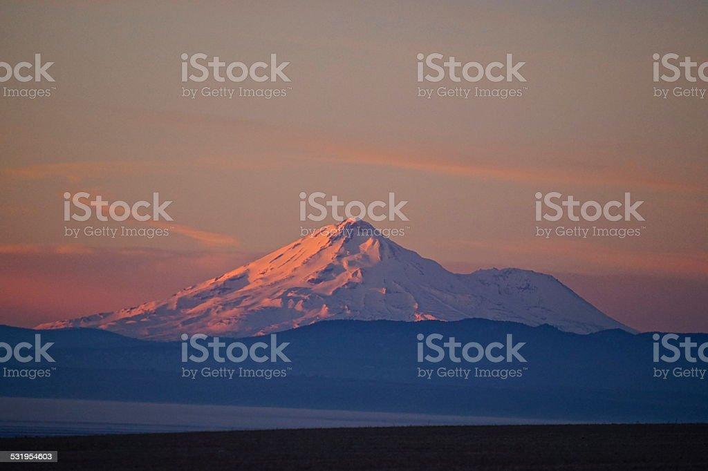 Mt. Shasta Rose stock photo