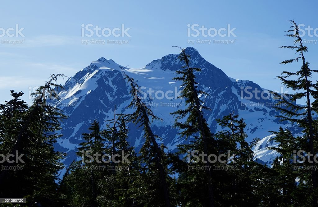 Mt. Shuksan Trees stock photo