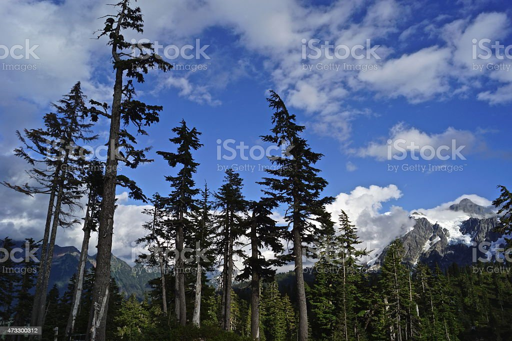 Mt. Shuksan Zone stock photo
