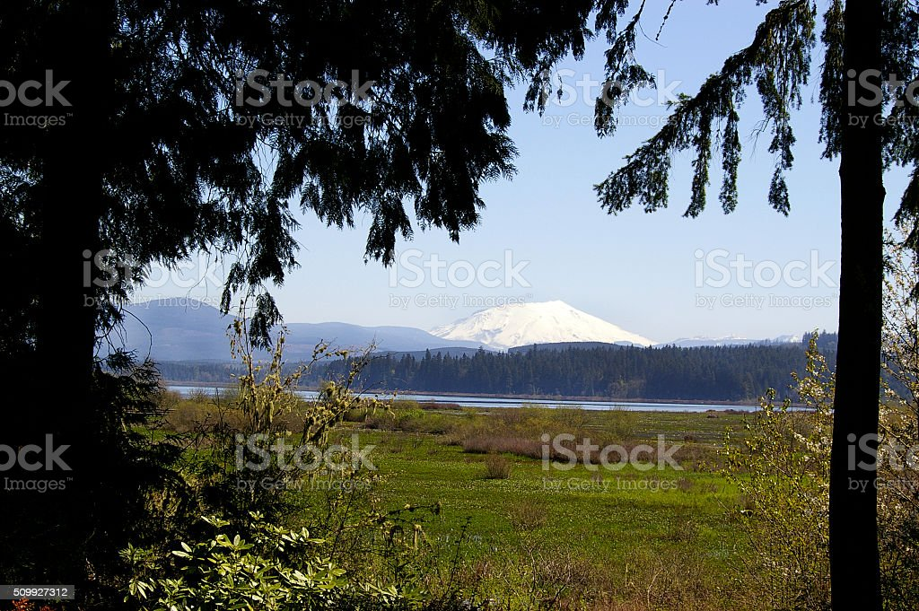 Mt. St. Helens stock photo
