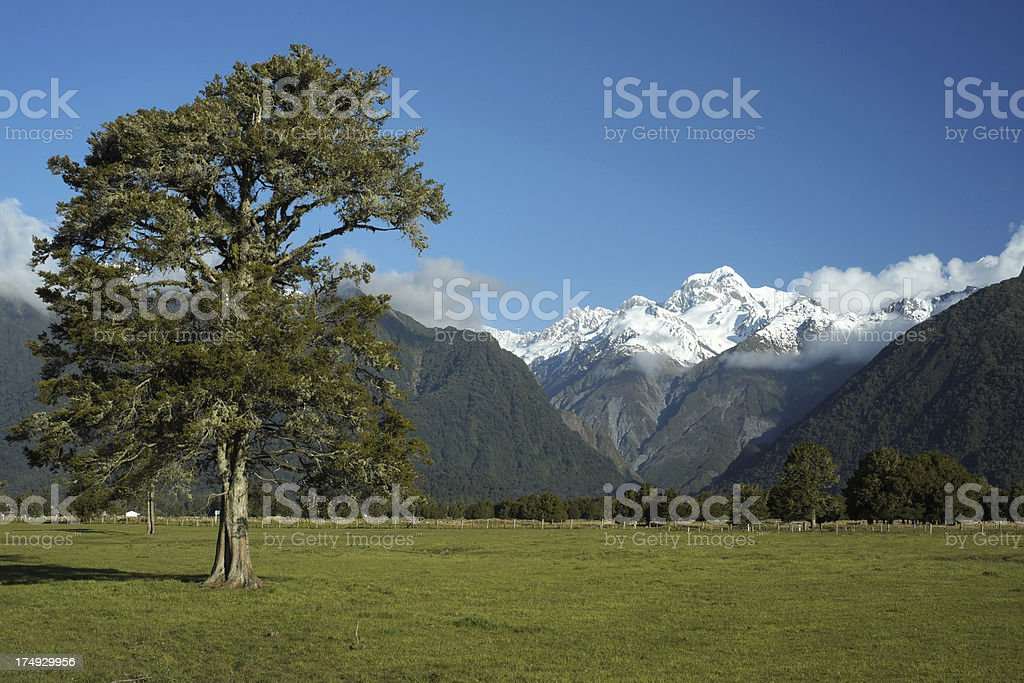 Mt Tasman And Tree stock photo