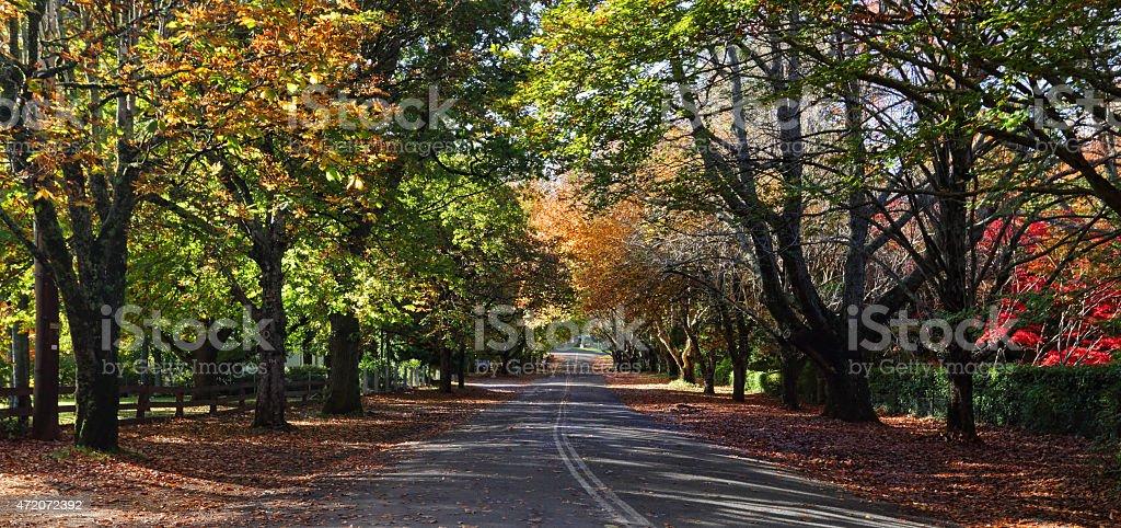 Mt Wilson Autumn Colours stock photo