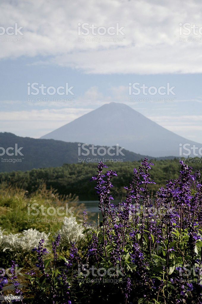 Mt.Fuji with flowers royalty-free stock photo