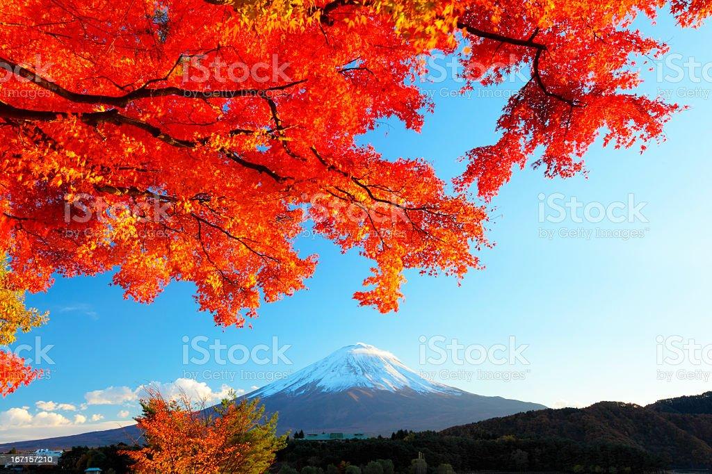 Mt.Fuji with maple stock photo