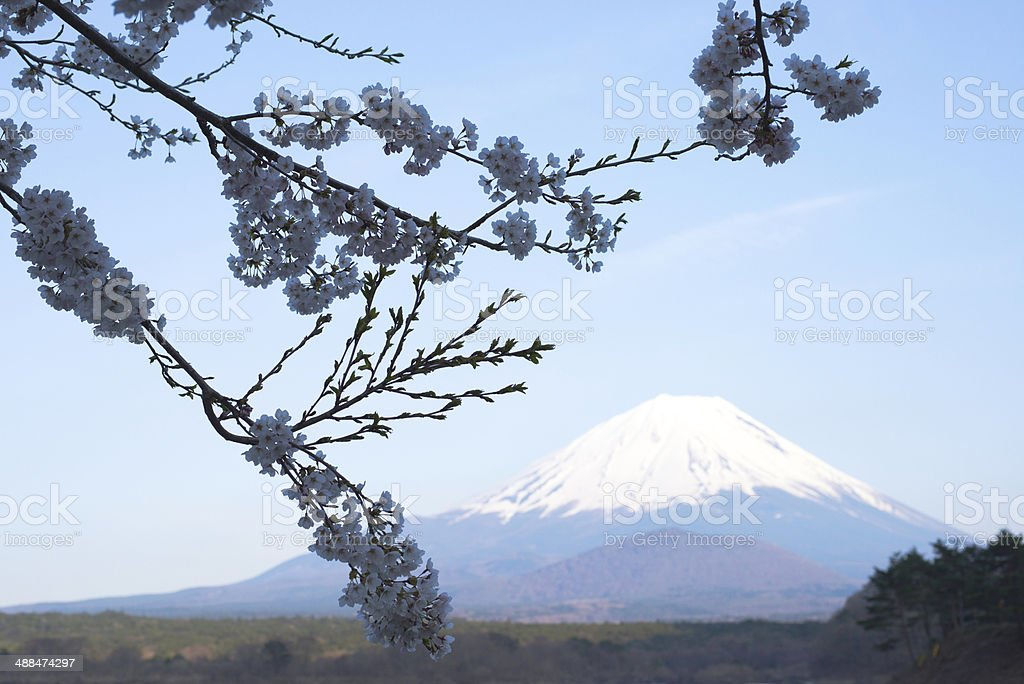 Mt.Fuji&Sakura stock photo