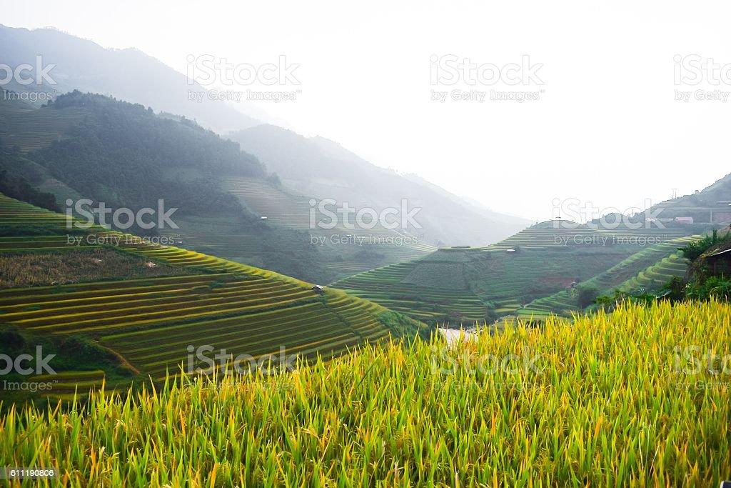 Mu Cang Chai Vietnam Rice Terrace stock photo
