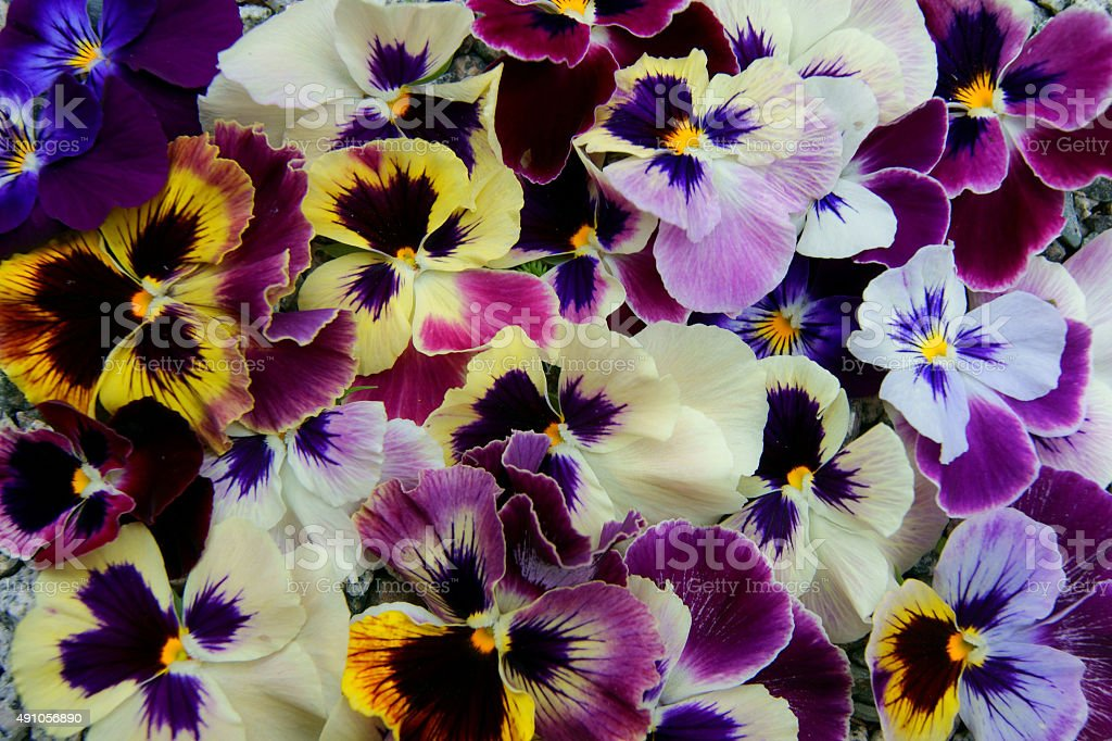 Much beautiful flowers stock photo