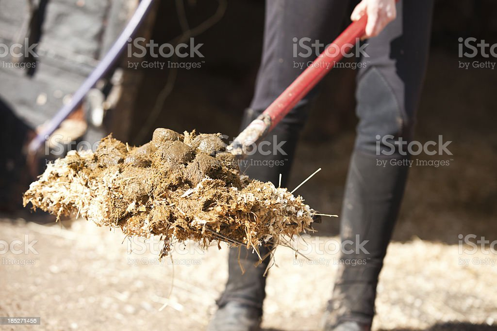 Mucking Out a Stable stock photo