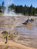 Mud and geysers in Yellowstone