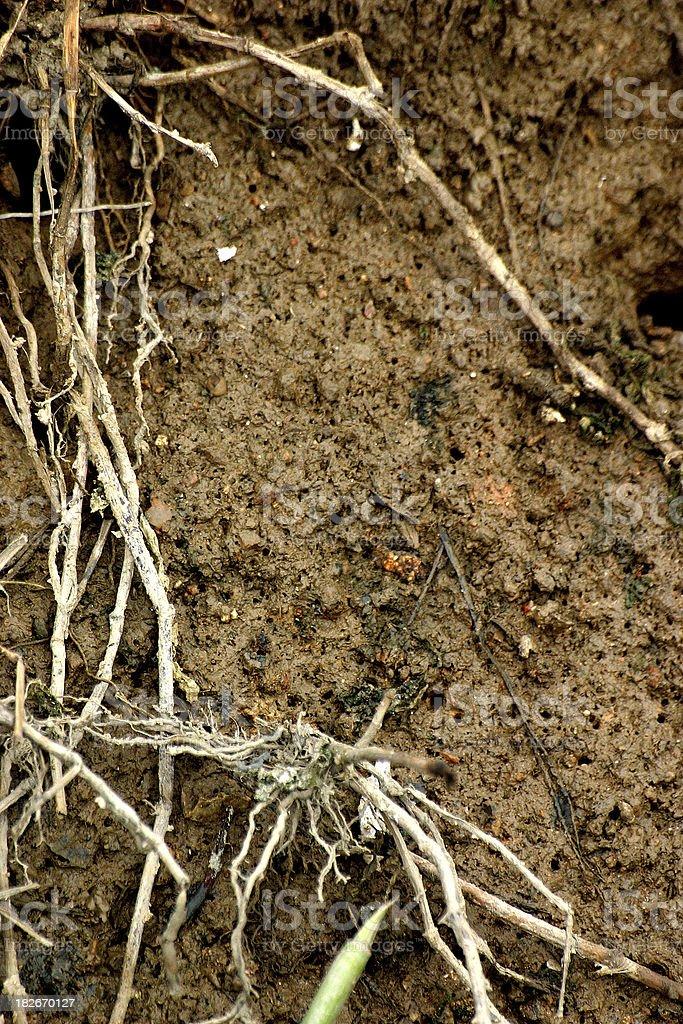 mud and vegetation royalty-free stock photo