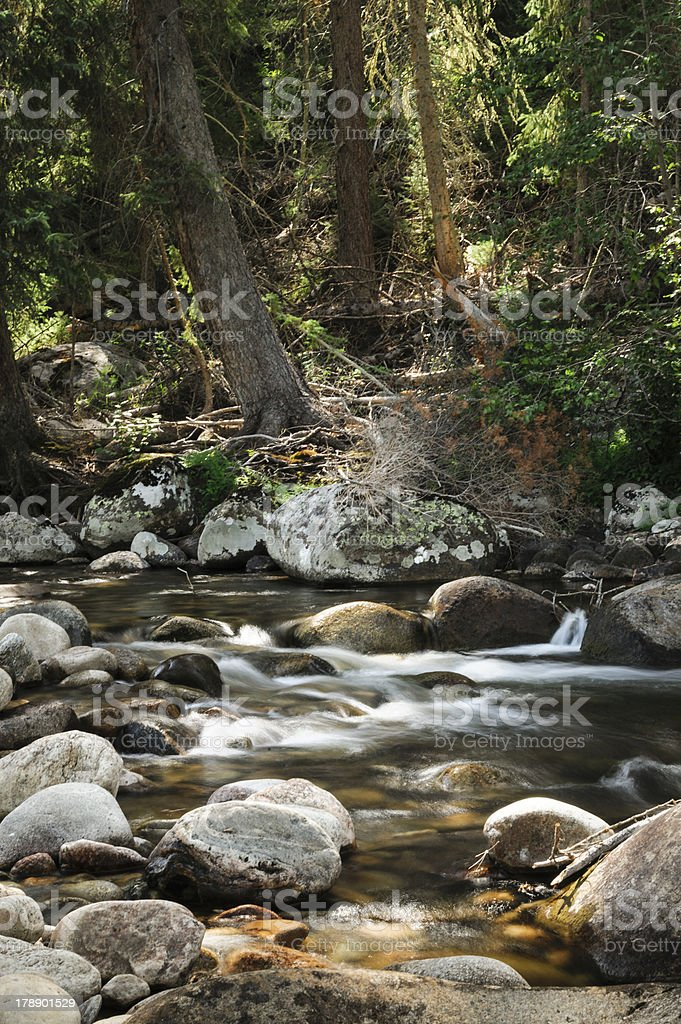 Mud Creek and Forest royalty-free stock photo