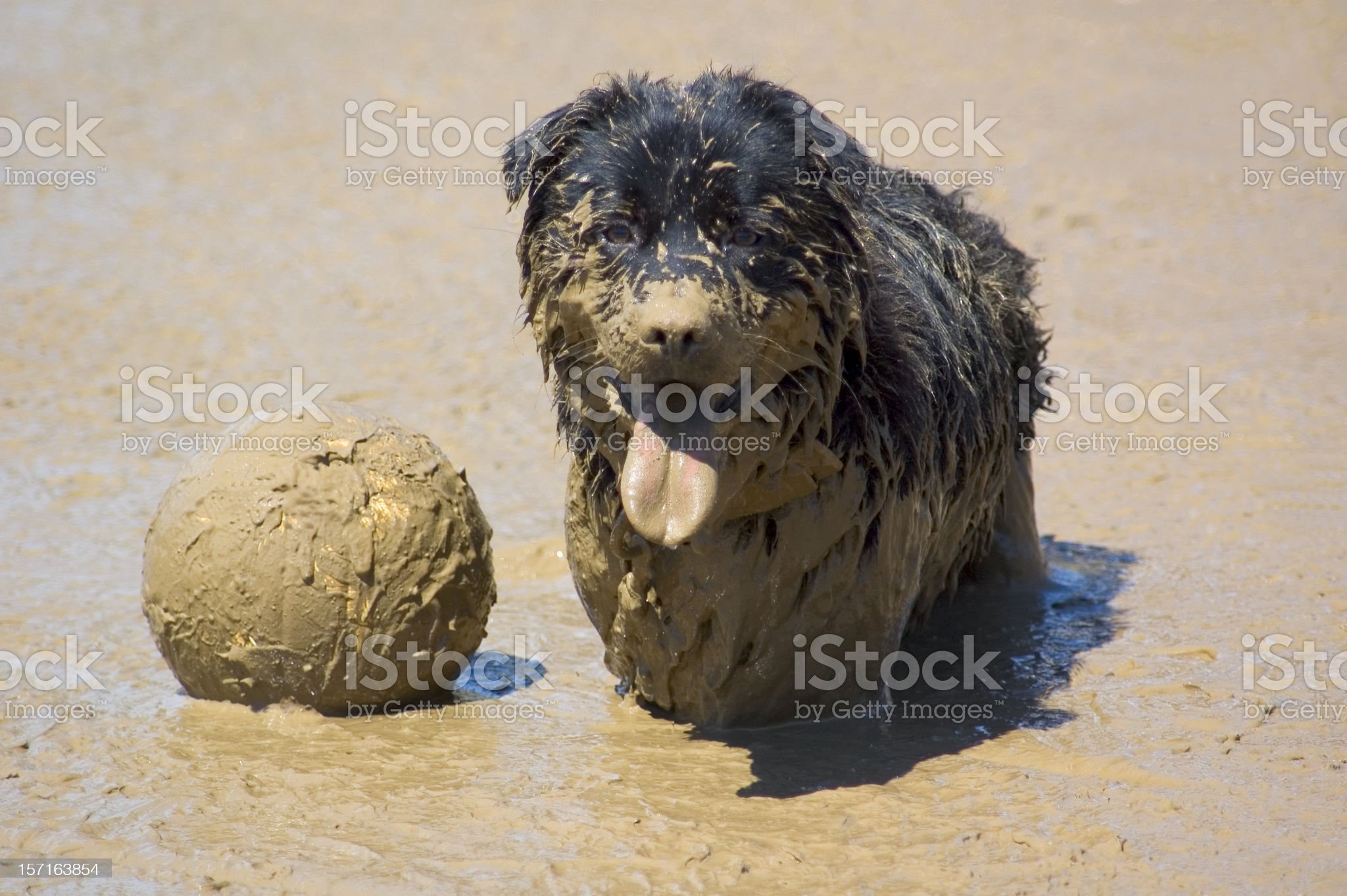 Mud Vollyball royalty-free stock photo