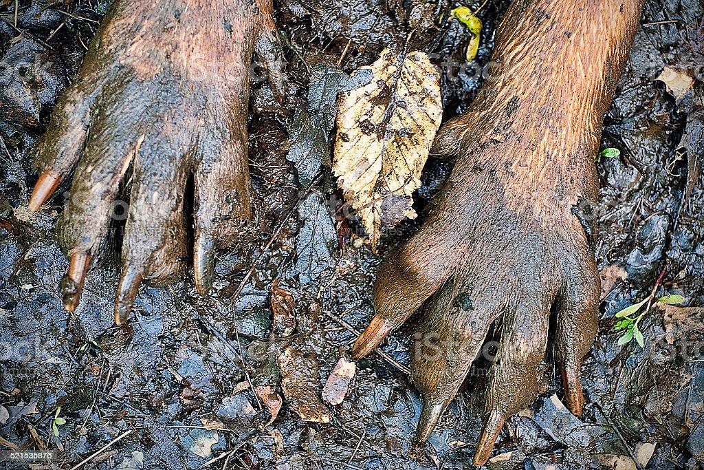 Muddy Dog Paws stock photo