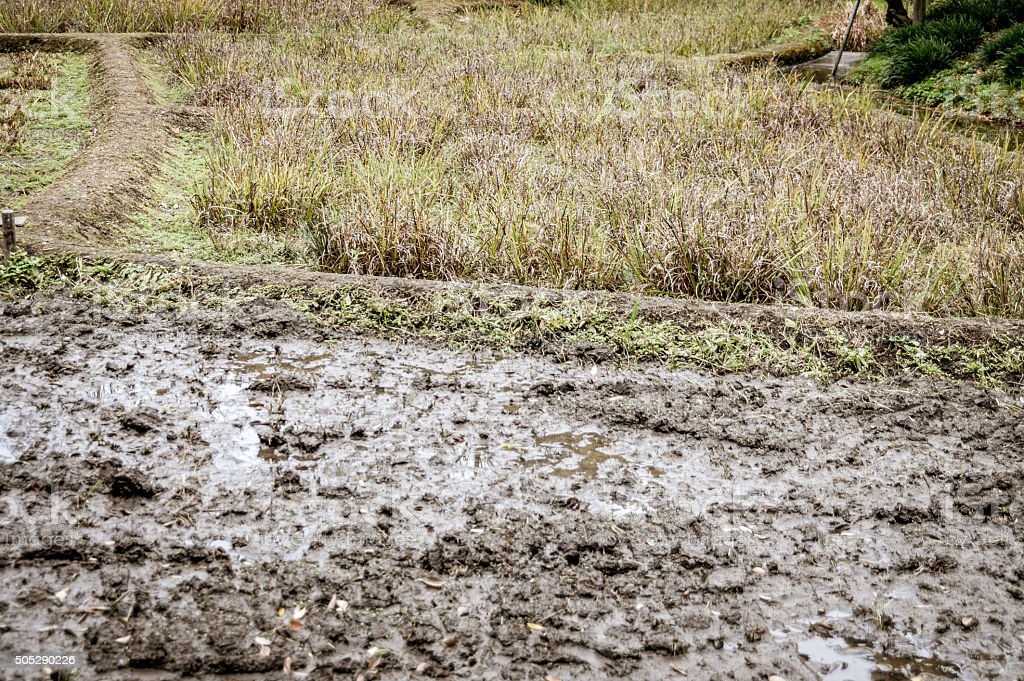 Muddy rice field background stock photo