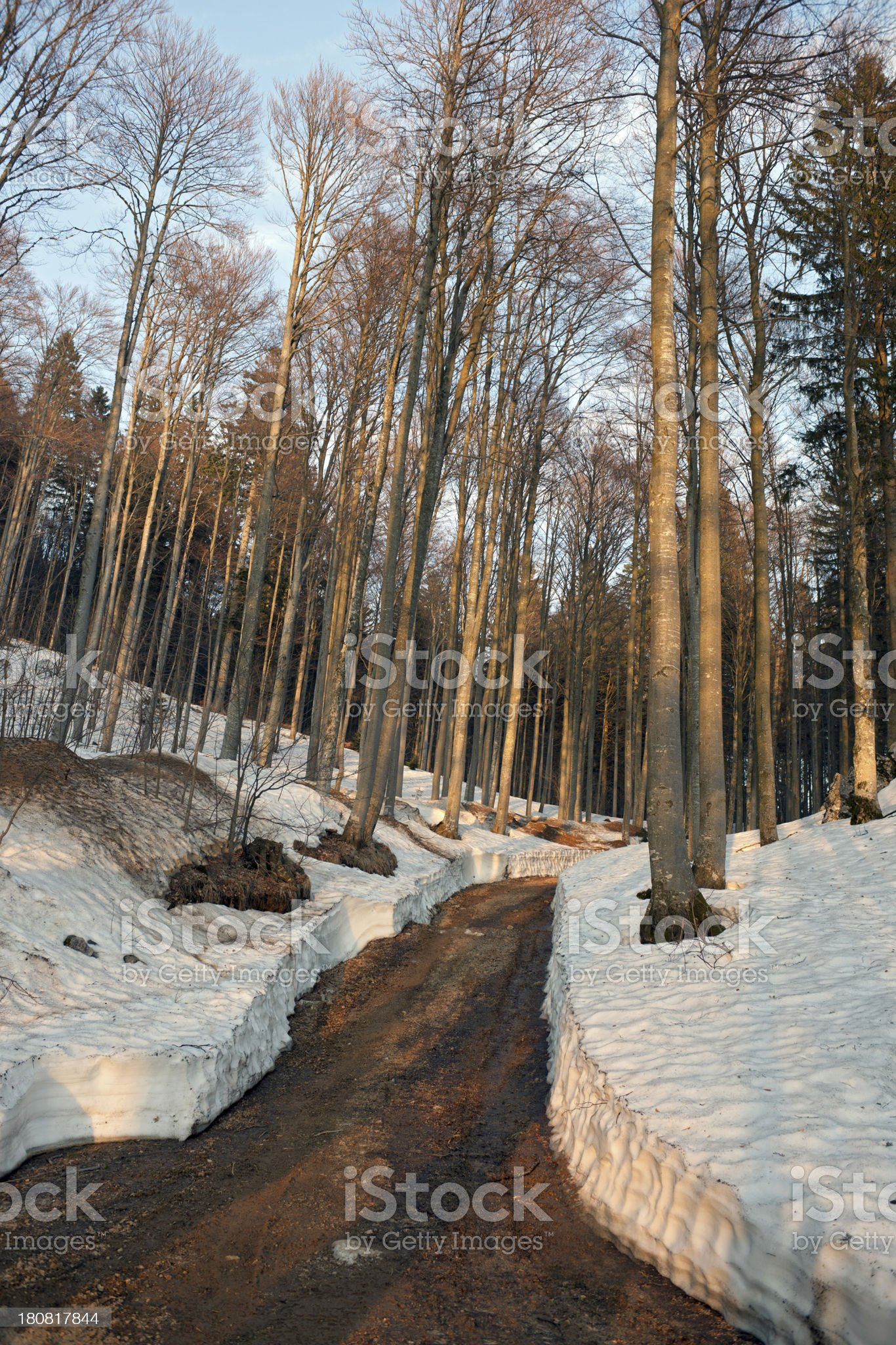 Muddy Road in Snowy Forest Slovenia royalty-free stock photo