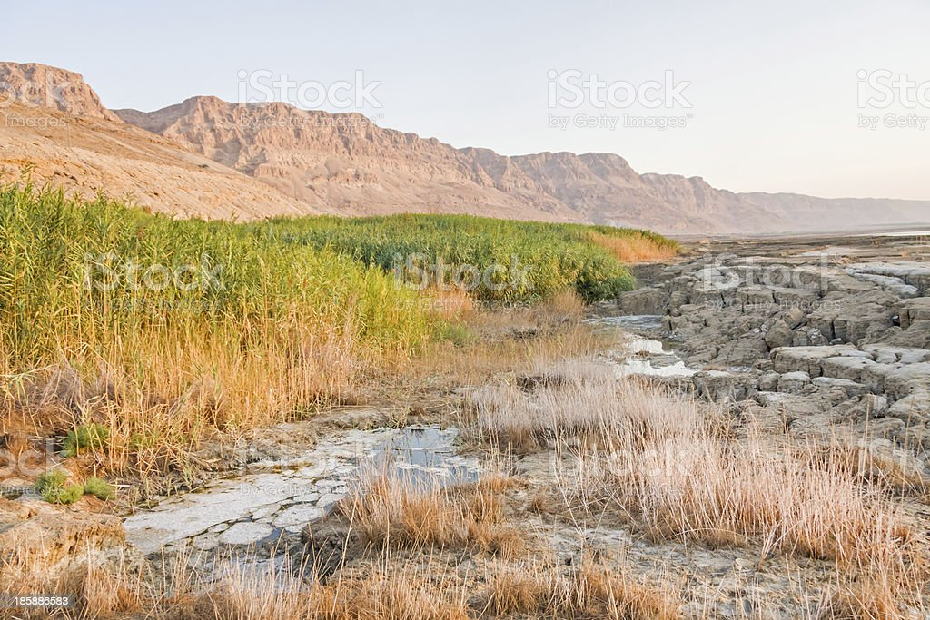 Muddy salinity unstable Dead Sea shore at dawn royalty-free stock photo