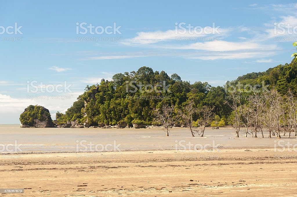 Muddy Sea Bako National Park - Borneo , Sarawak royalty-free stock photo