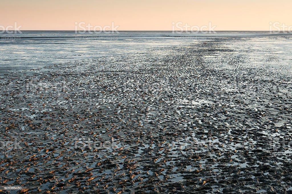 mudflat landscape at sunset stock photo