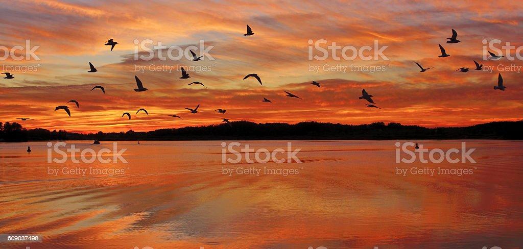 Mueritz National Park,Mecklenburg Lake District stock photo
