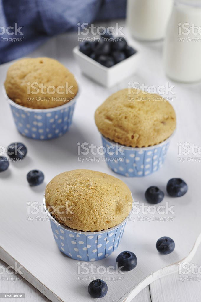 Muffins with fresh blueberries royalty-free stock photo