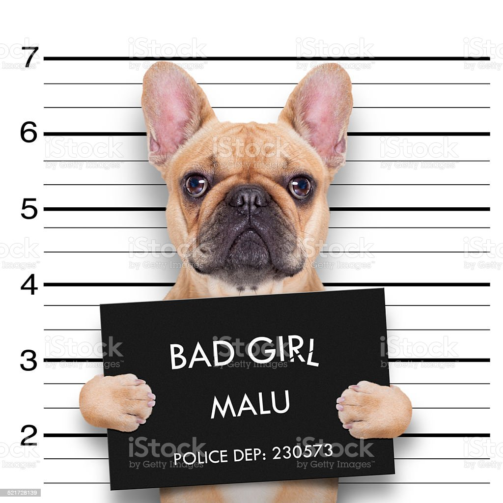 mugshot dog stock photo