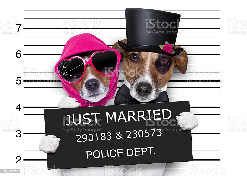mugshot just married dogs stock photo